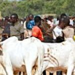 Ukwa people protest relocation of Cattle Market to Obehie