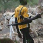 Fulani herdsmen invade Falae's farm, destroy crops